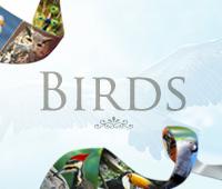 feature-fc-birds