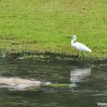 Bishan-Ang Mo Kio Park Pond Gardens