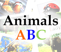 feature-animals