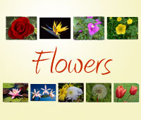feature-fc-flowers